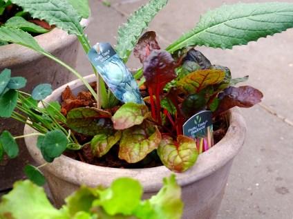 bladbede og artiskok i krukke