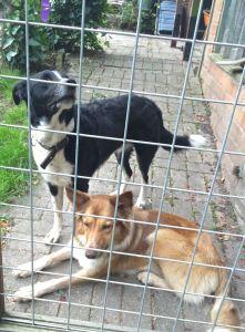 en onze honden blijven soms achter het hek!