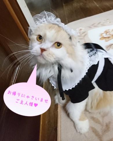 メイド服猫