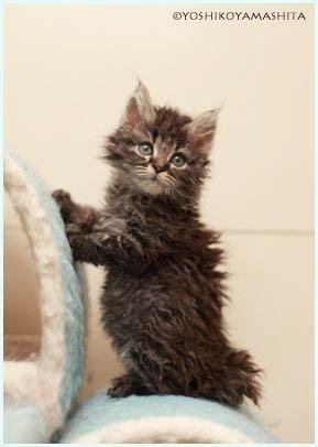 スクーカム子猫