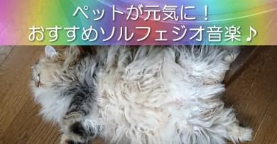 ペット用ソルフェジオ音楽