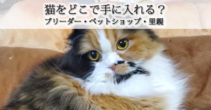 猫を買うならブリーダー