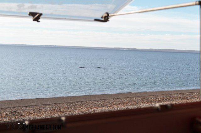 We got to see whales through the kitchen window.