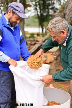 Loading the pulped apples into a sack for pressing
