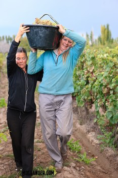 Sarah and Annette carrying out the grapes
