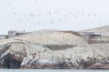 The huge number of birds meant that a Guano processing plant was build