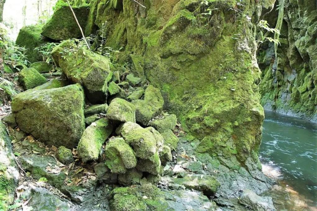 岩にビッシリ張りついたコケ