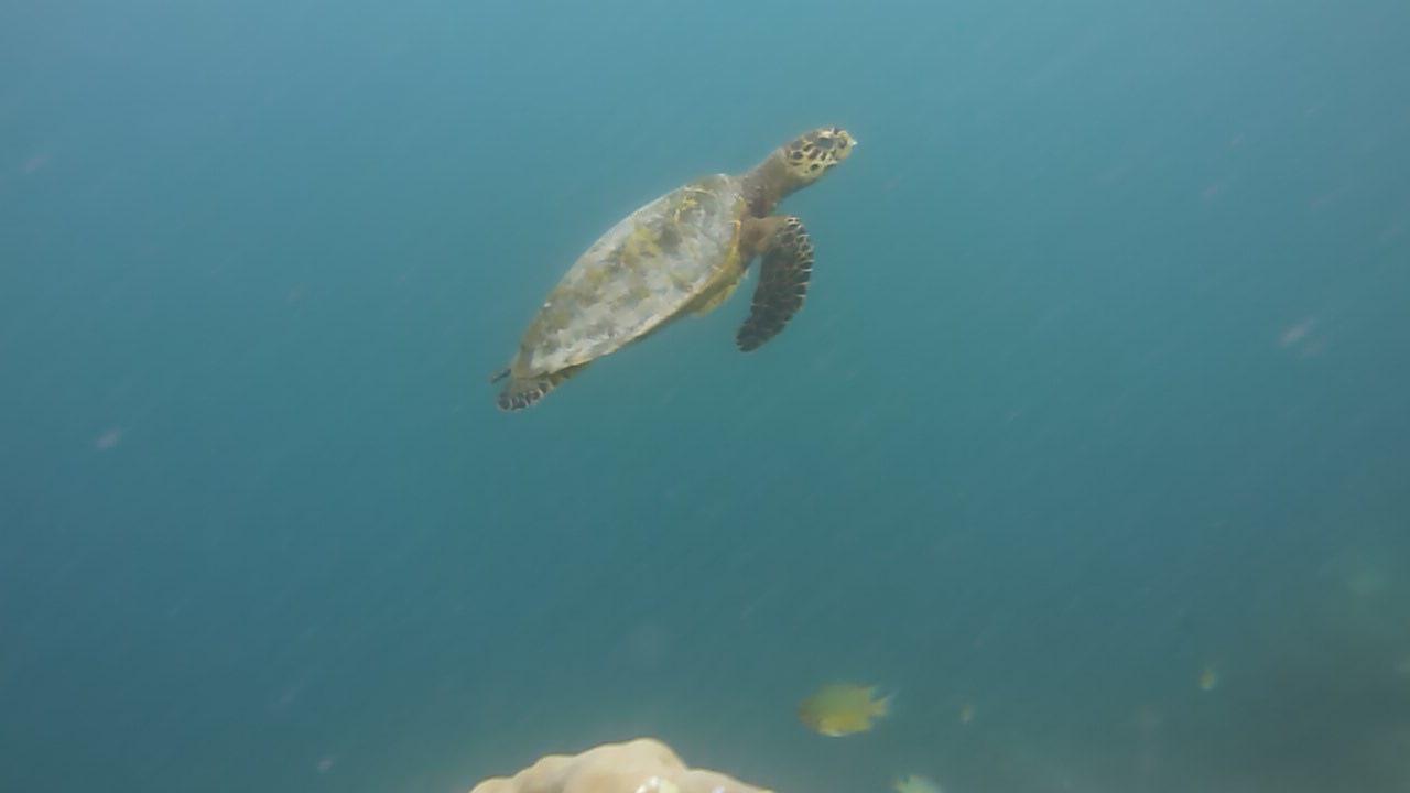 モルディブ_バロス_家族旅行_体験ダイビングでウミガメと泳ぐ_ウミガメ遭遇