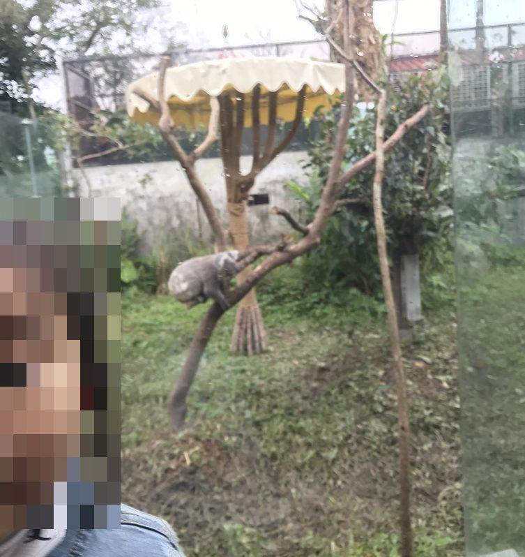 台北動物園-コアラと娘
