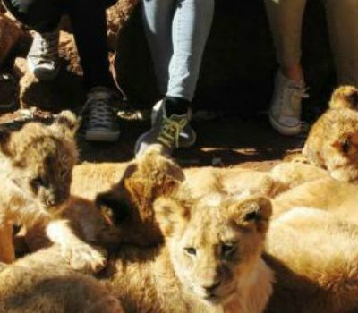 Up-Close-And-Personal African Wildlife Experience