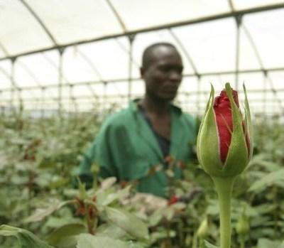 Flower growers in Africa
