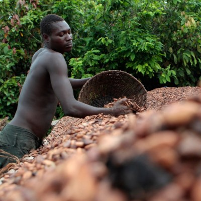 cocoa producers
