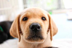 殺虫剤 犬 影響 中毒 誤飲