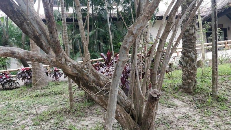 Medicinal plant at Vedic Village