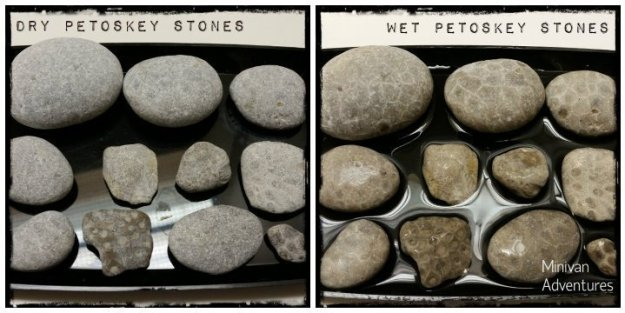before and after images of petoskey stones. Dry and then wet.
