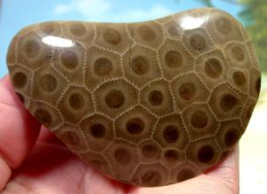 a polished petoskey stone