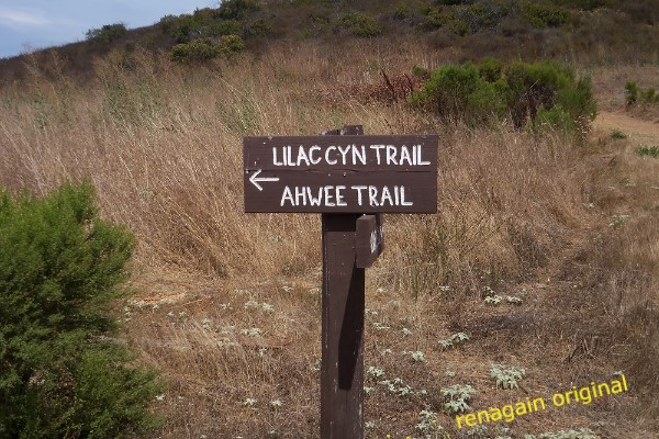 Trail marker: Lilac Canyon Trail and Ahwee Trail (with an arrow pointing the way)