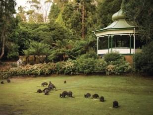 Resize_-_Cataract_Gorge_Reserve,_Launceston_credit_Tourism_Tasmania__Rob_Burnett