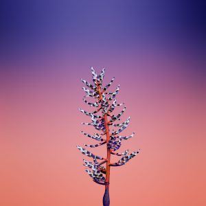 iPhone X Stock Wallpapers Mohamedovic 3 scaled