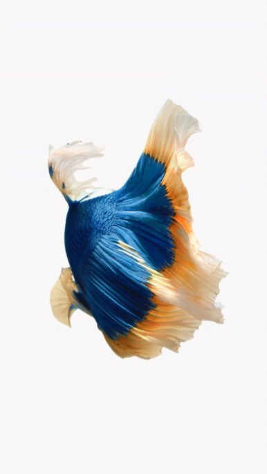 iPhone-Blue-Orange-Fish-Live-Wallpaper-03