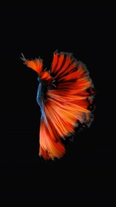 iPhone Blue Red Fish Live Wallpaper 06
