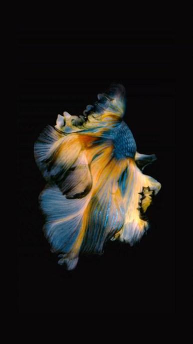 iPhone-Blue-Yellow-Fish-Live-Wallpaper-04