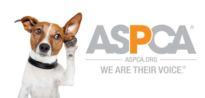 تطبيق APCC