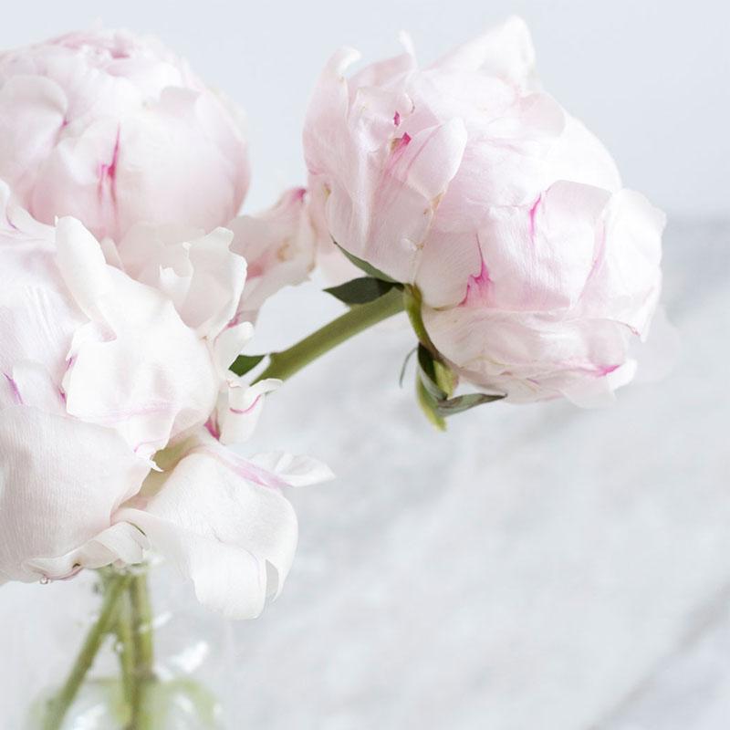 news nouveauté actualité du studio de design mohanita créations photo ambiance pivoine fleur flower rose poudre marbre