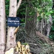Free Forest Bathing | Mohawk Valley Today