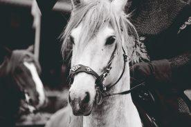 love that horse