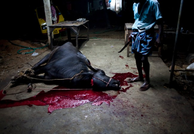 Unnikrishnan Raveendranathan : Blood Money #7