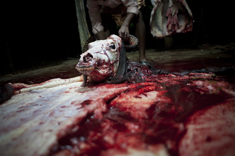 Unnikrishnan Raveendranathan : Blood Money #19