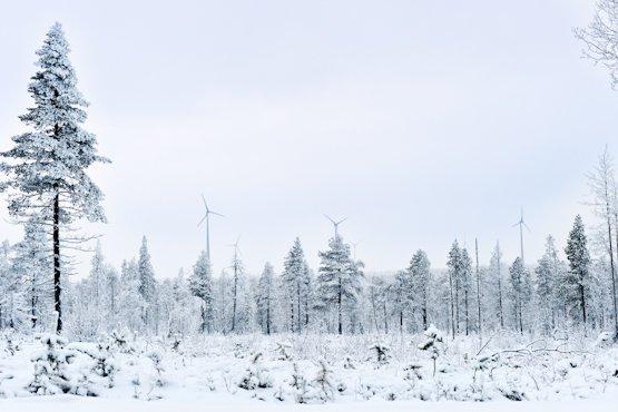 Elisa Ferrari: The Sami Way