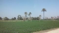 Khujoor 2
