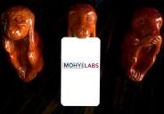 Monkeys w card