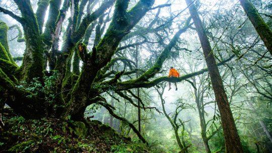 Avons nous besoin de plus de contact avec la nature ?