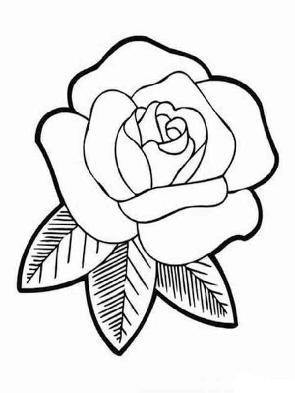 Раскраски цветы Розы Скачать и распечатать раскраски