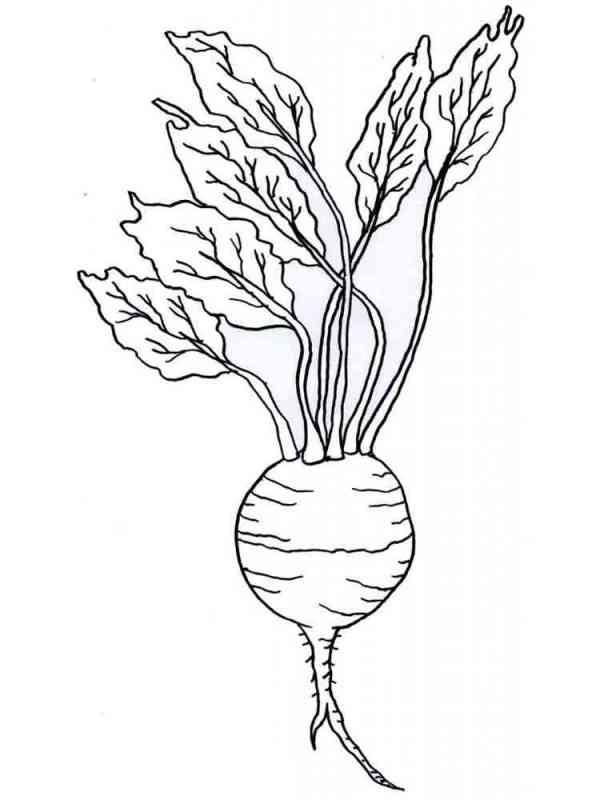 Раскраска овощ Репка - распечатать в формате А4