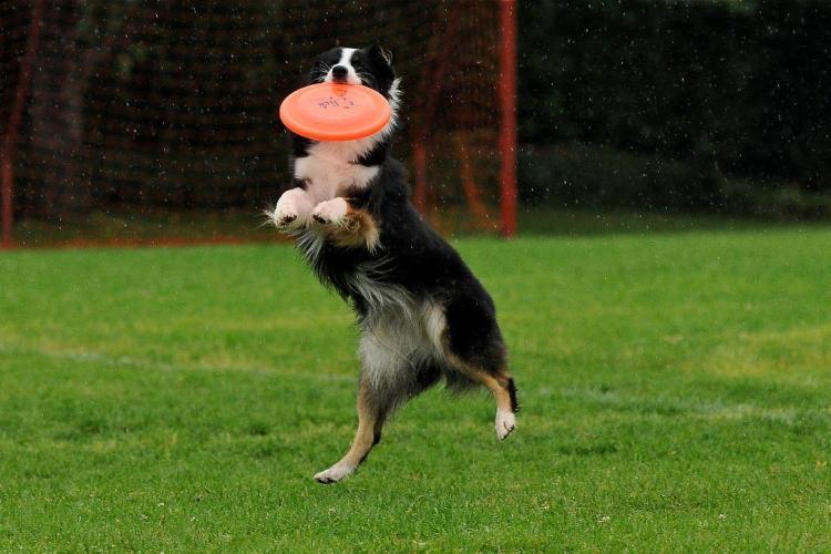 jessy disk dog