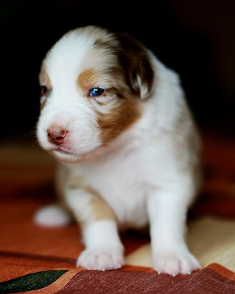 Puppy jessy Weeko