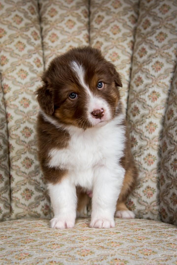 Jack puppy 2021 5w