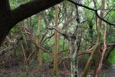 Bamboo Park
