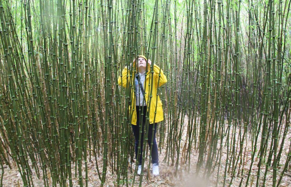 3ème journée en Irlande – Bamboo Park & soirée à Schull
