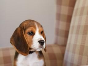 moi-du-toi-photography-dog-portraits-1224