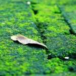 Sân rêu nhà cũ – truyện ngắn Hoàng Công Danh