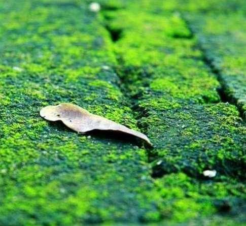 Sân rêu nhà cũ - truyện ngắn Hoàng Công Danh
