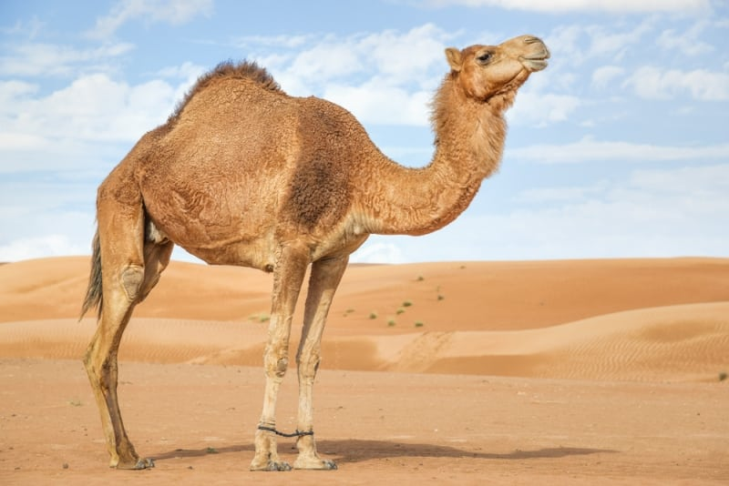 động vật trên cạn cao nhất thế giới