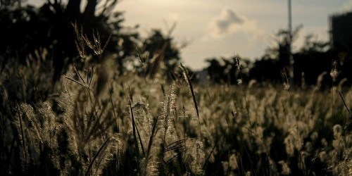 Em cứ sống một cuộc đời của cỏ