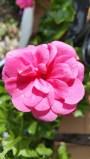 fleur 6