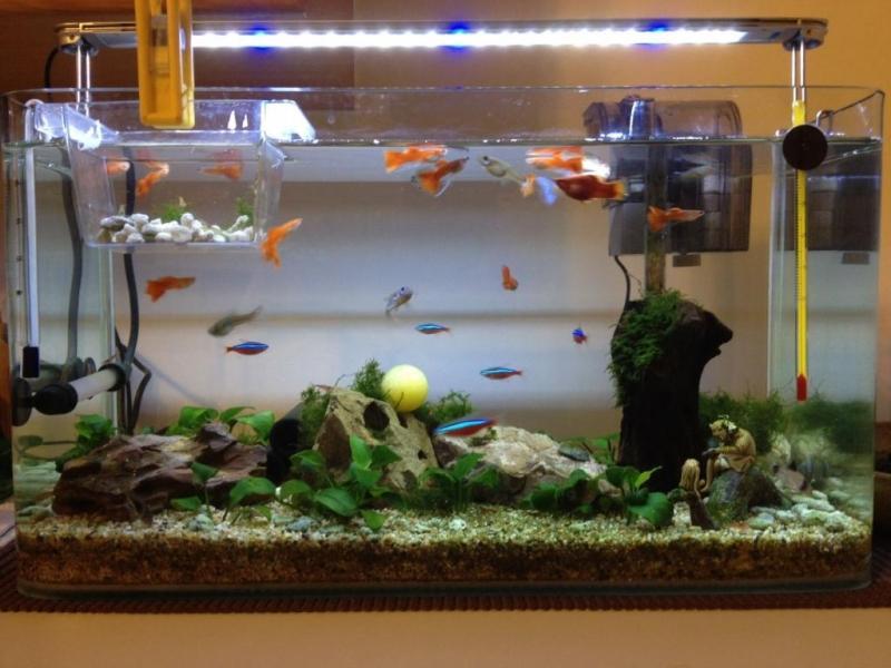 Πώς μπορείτε να συνδέσετε μια δεξαμενή ψαριών